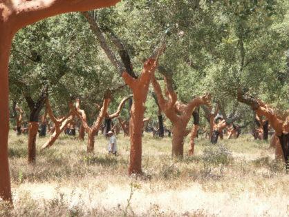 Экологическая ценность пробковых лесов