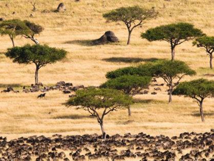Экономичеcкая ценность пробковых лесов